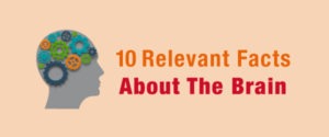10 Relevant Facts About the Brain