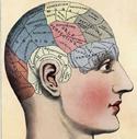 brain_facts